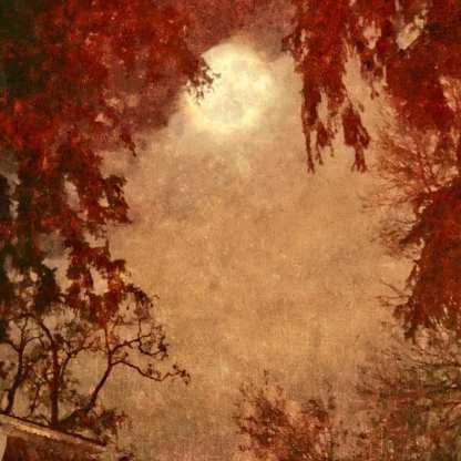 An Evening With the Moon ©Wendi Schneider