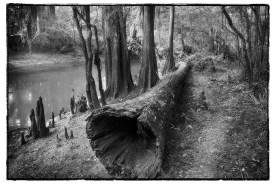Cypress Log