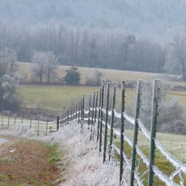 fence line/tree line