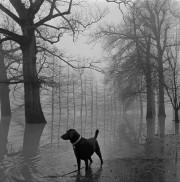 Dog in the Fog | Maude Schuyler Clay