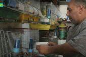 """""""عصافير الزينة"""".. هواية ومصدر دخل مهدد بالزوال في ريف إدلب"""