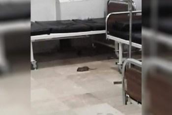 إعلام النظام يشتكي الحشرات والقوارض في مشفى حكومي بالحسكة!