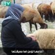 أم محمد.. مربية أغنام تساعد زوجها بتأمين معيشة عائلتها