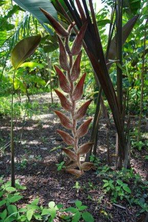 Helikonien - Blumen, Blüten und Pfanzen in Surinam