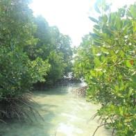 Hutan Bakau Pulau Pari