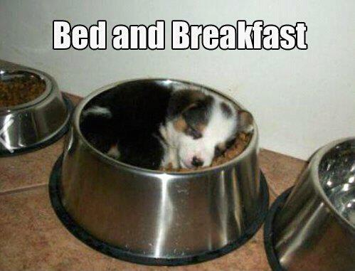 Bed and Breakfast animals