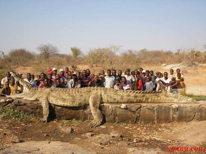 Biggest Crocodile Ever Captured