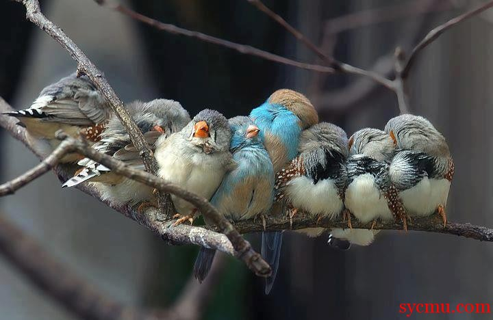 Birds tight on a branch for the birds