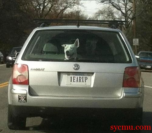 1Earup dog has a car named after him