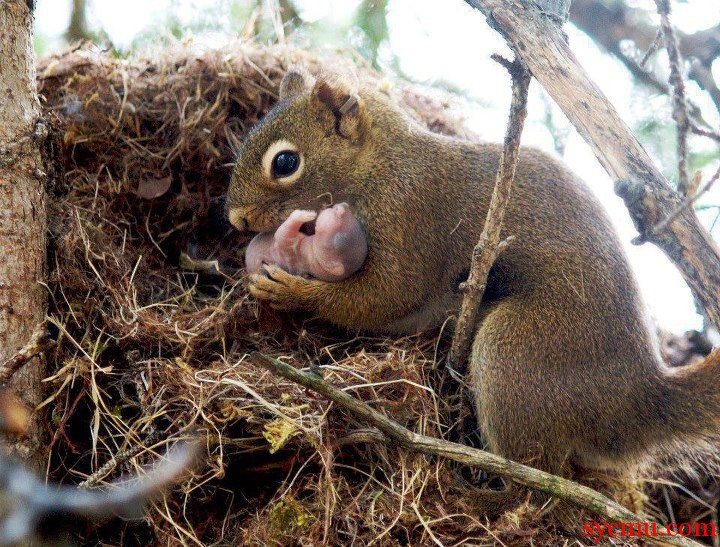 Baby squirrel with mom