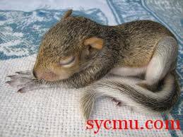 Baby squirrel sleeping cute