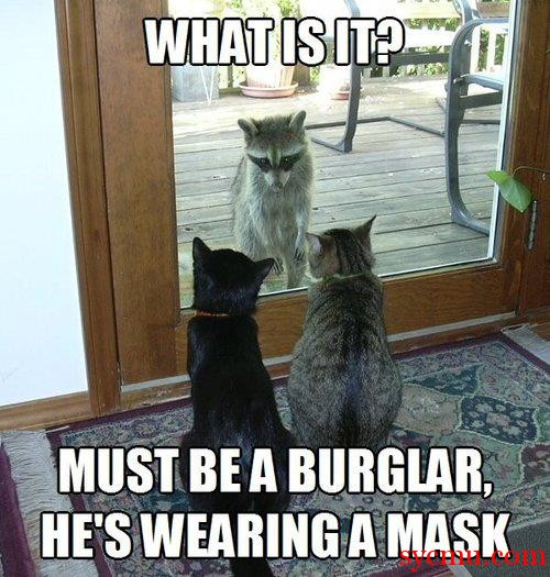 Cats see Raccoon Burglar