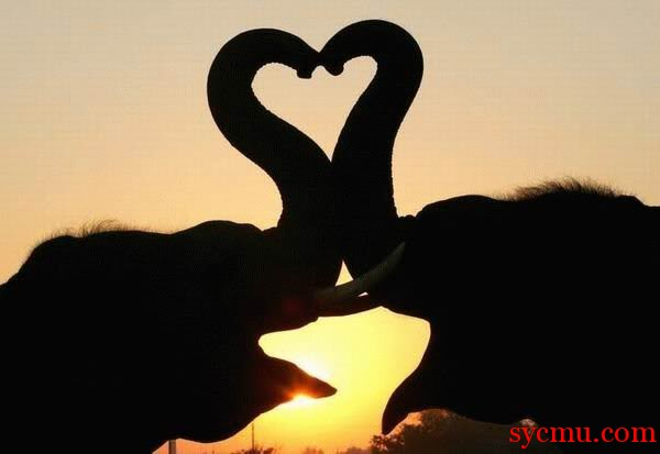 Trunk heart sunset