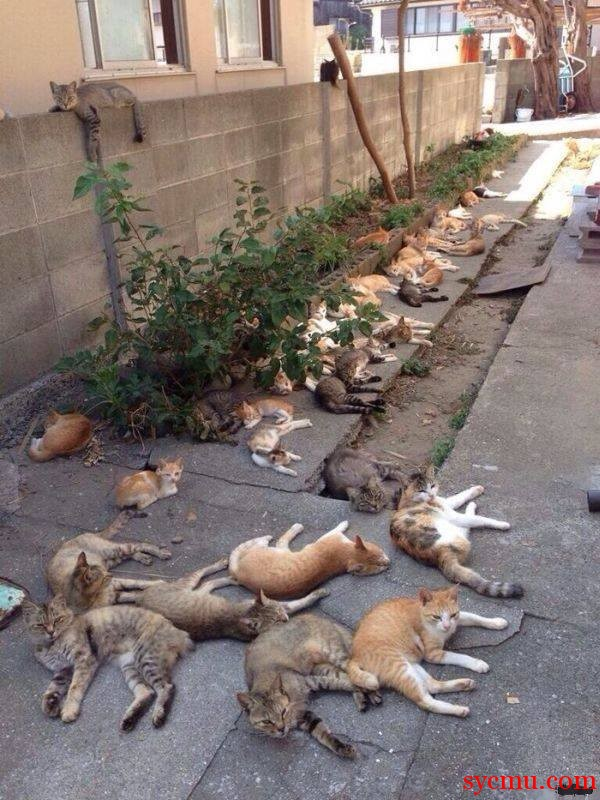 Lots of Cats in one street