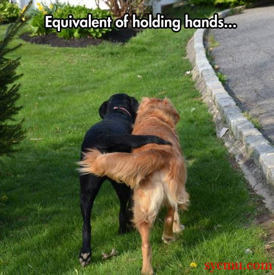 Dogs holding hands tails
