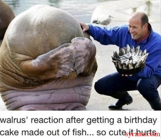 Walrus is Shy
