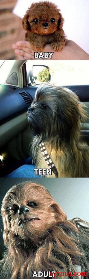 Baby, Teen, Adult, Star Wars