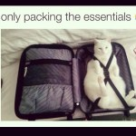 Only Packing the Essentials