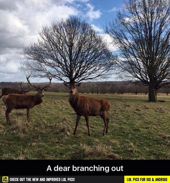 deer branching out
