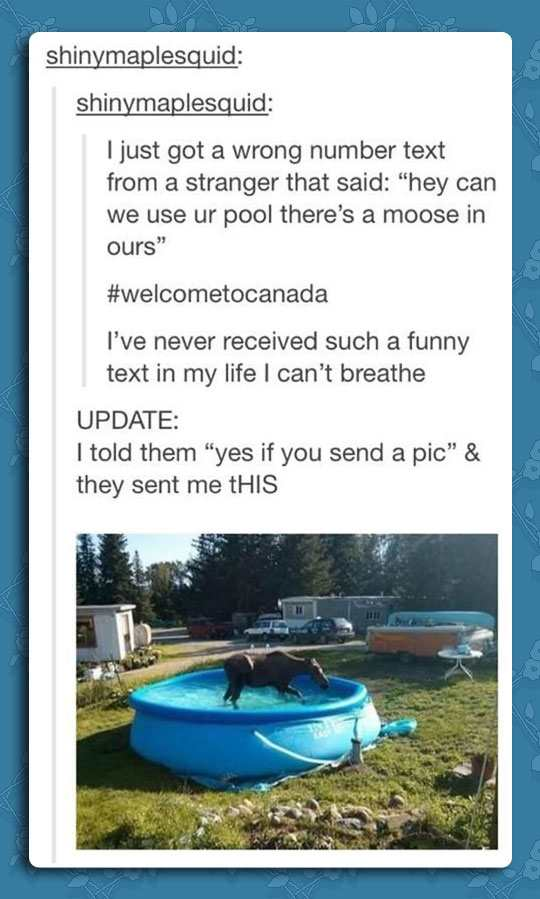 Moose in the pool Funny Pic dump