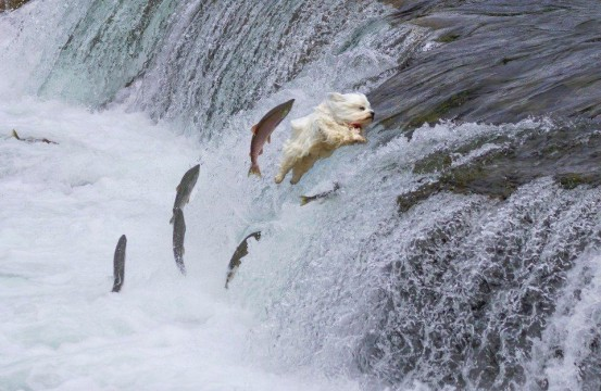 Dog jumping with fish