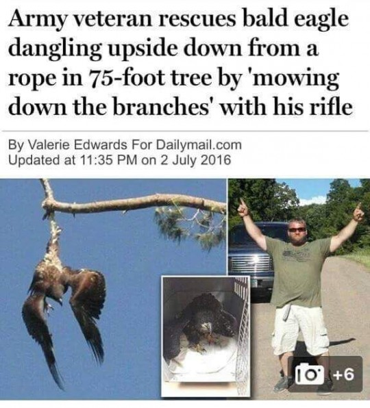 American Rifle down a branch