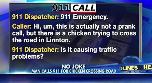 Is the Chicken causing traffic?