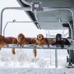 Ski Patrol Dogs on Lift