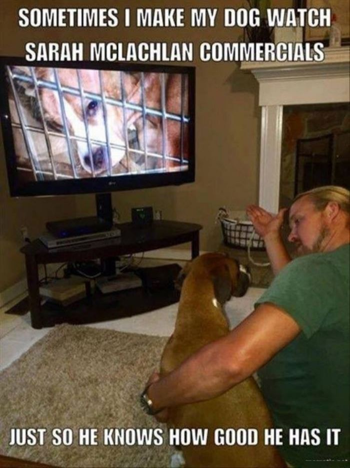 Dog TV watch