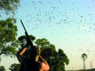 Dove hunt in Argentina