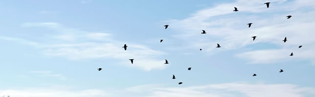 Pigeon hunting Argentina