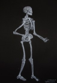Skeleton with white conte