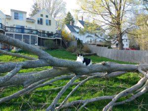 Sabrina on tree.