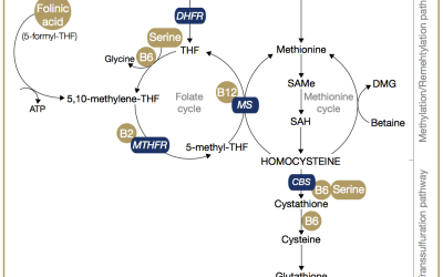The MTHFR Gene and Pregnancy, Infertility and Miscarriage.