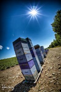 Ruche abeille meil #miel #honey #bee #Ruche #abeille #sylvainlandry #5d3 #5dmarkiii #canon #eos #photographe #photographer More photos / en voir plus sur : www.sylvain-landry.com