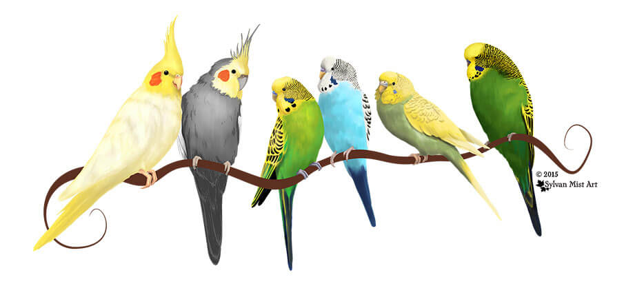 Parakeets and Cockatiels art by Sylvan Mist Art