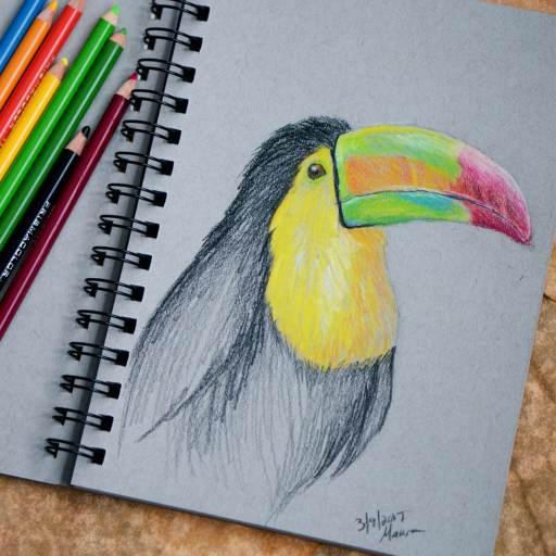 toucan colored pencil sketch