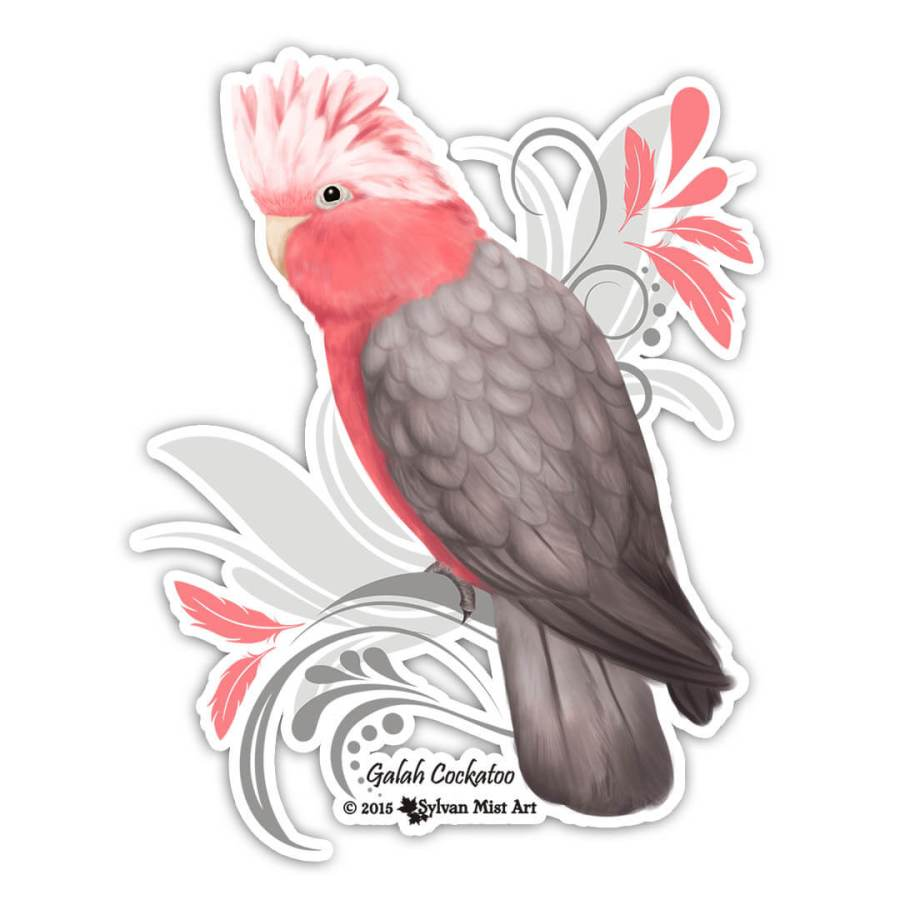 galah parrot illustration