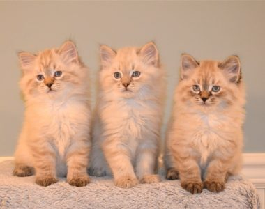 Kitten Gallery #3