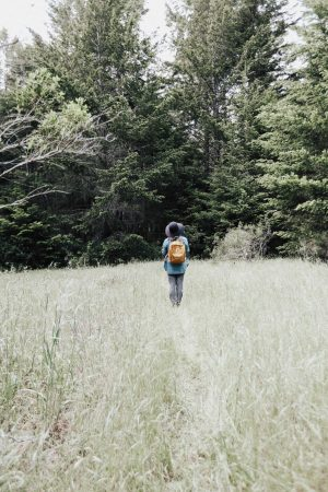 MARIN HEADLANDS HIKING & FOREST BATHING MEDITATION SHINRIN-YOKU - TRAVEL: MARIN HEADLANDS HIKE & FOREST BATHING MEDITATION (SHINRIN-YOKU) featured by popular San Francisco travel blogger, Sylvie in the Sky