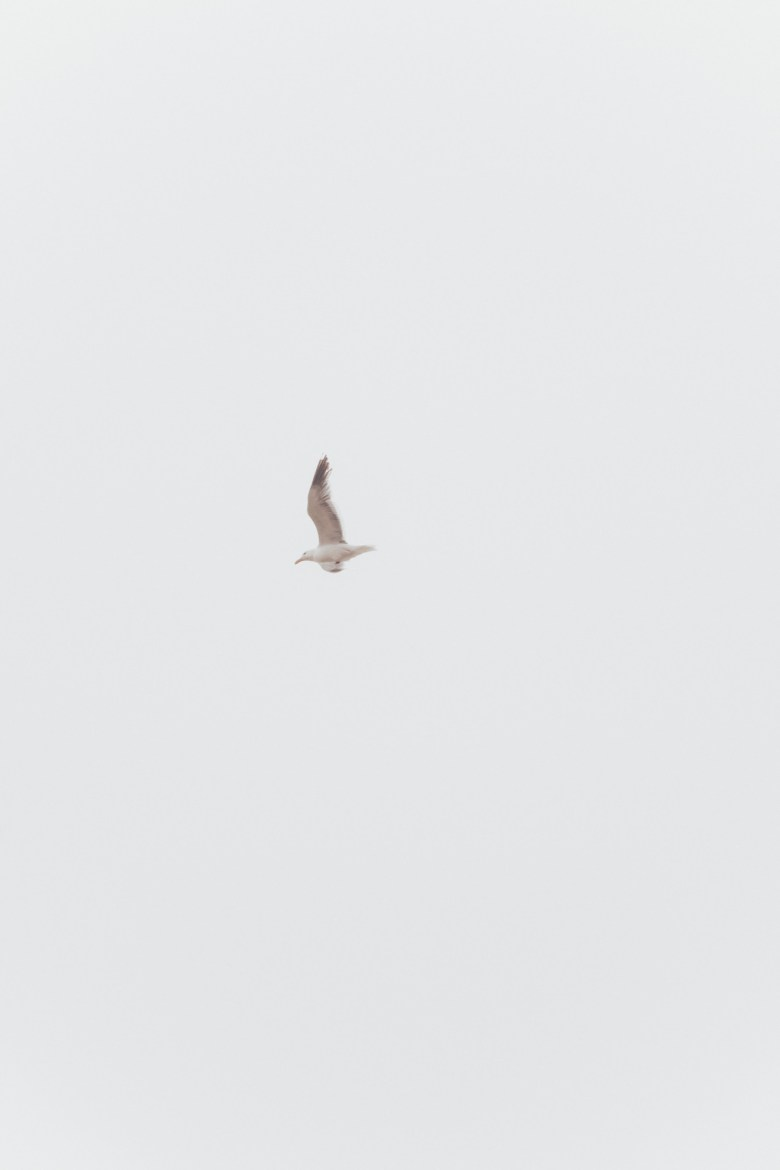 How to Manifest Anything You Want - 4 Steps by popular San Francisco lifestyle blog, Sylvie in the Sky: image of a seagull flying.