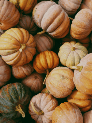 8 Health Benefits of Pumpkin featured by top San Francisco healthy lifestyle blogger, Sylvie in the Sky
