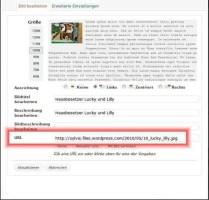 Upload einer Bilddatei und Verlinkung mit URL aus der Mediathek