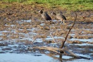 Lustige Wandervögel