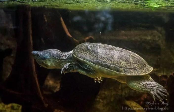 Actiongeladene Schildkröte