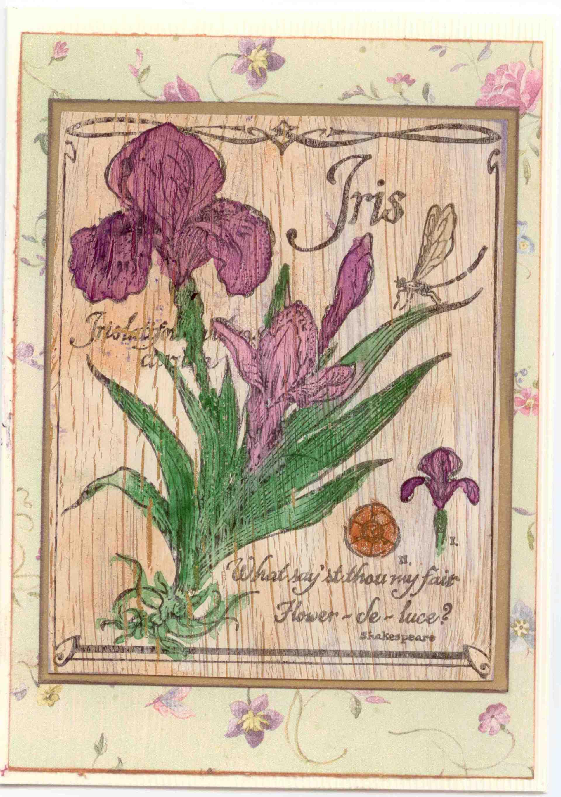 Vintage iris