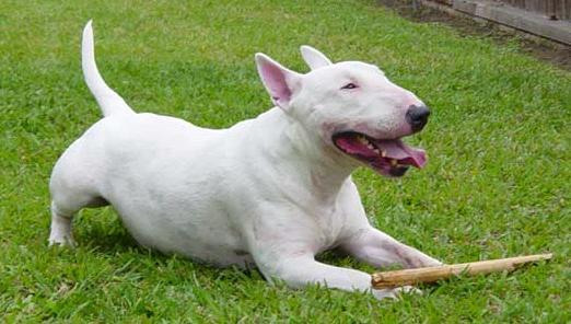 Dog2 en Jpeg
