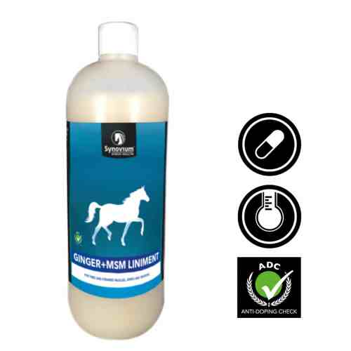 1L Ginger MSM horse liniment for muscles