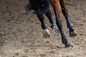 What is in Your Horse's Joint Supplement? - Synovium Horse Health