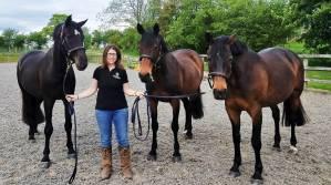 Gemma Dennis Showjumper Synovium Horse Supplements